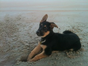 Diogi Therapy Dog